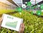 Aspecte privind tratamentul contabil al activelor biologice și produselor agricole