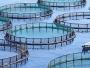 A fost aprobat ajutorul de stat pentru reducerea accizei la motorină în acvacultură