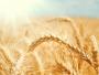 Excedent de peste 454 milioane de euro în comerţul internaţional cu cereale, în primul trimestru