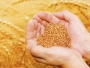 Exporturile de cereale ale României au crescut cu 17,5% în primul semestru
