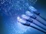 ANCOM: 5,1 milioane de conexiuni la Internet fix şi 19,6 milioane de conexiuni mobile, în primul semestru