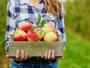 INS: Exporturile de fructe comestibile au scăzut cu 9,2% în primele 10 luni din 2019; importurile s-au redus cu 1,6%