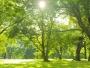 Promenada Verde – primul spaţiu de agrement care va traversa Sectorul 1 de la nord la sud