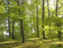 Romsilva va planta circa 20 de milioane de puieţi forestieri în campania de împăduriri de primăvară