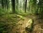 Catalogul pădurilor virgine și cvasi-virgine din România a fost actualizat cu peste 5.100 de hectare