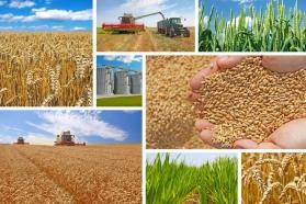 169 milioane euro pentru promovarea produselor agricole europene