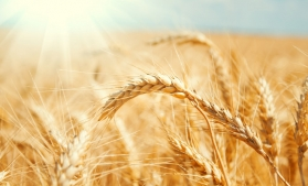 Modul de organizare a contabilității de gestiune și calculul costului de producție specifice activităților agricole