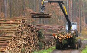 Operatorii economici au exploatat, anul trecut, un volum de lemn mai mic cu 3,1% faţă de 2016