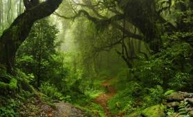 România are, după Ucraina, cea mai mare suprafață de păduri înscrisă în Patrimoniul Mondial UNESCO
