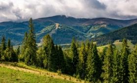 Fondul forestier național a crescut cu 0,3% în 2018