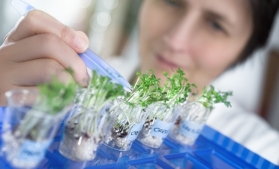 Financial Times: Cercetătorii mizează pe microbi pentru a revoluţiona industria alimentară şi agricultura