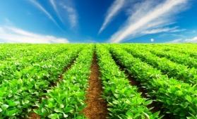 Malta și România, pe ultimele locuri în UE la ponderea suprafețelor alocate agriculturii organice