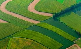 Suprafața agricolă a României alocată culturilor organice a crescut cu 37,1% în perioada 2012-2019