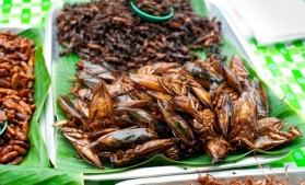 Comisia Europeană a autorizat, în premieră, o insectă ca aliment
