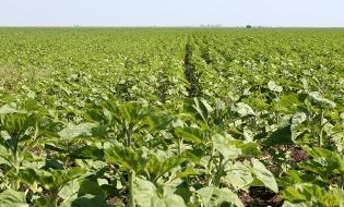 Alocări financiare pentru agricultorii din sectorul vegetal