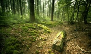 Inventarul Forestier Național: Suprafața totală de pădure – 7.037.607 ha, din care terenuri acoperite cu arbori, 6.929.047 ha
