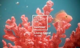 Living Coral, culoarea anului 2019