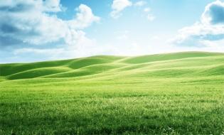Studiu: Mai multe pajiști și mai puține culturi intensive pentru a hrăni Europa în mod durabil în 2050
