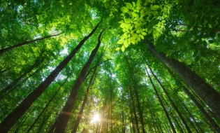 Proprietarii de terenuri forestiere cu suprafeţe mai mici de 30 ha vor avea asigurată paza pădurilor