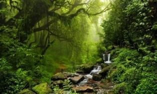 MMAP: Încă 40.000 de hectare în Catalogul Național al Pădurilor Virgine și Cvasivirgine
