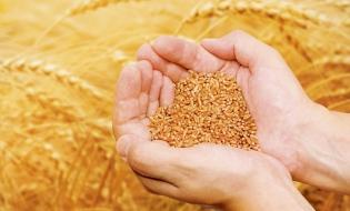Secretar de stat: Dorim încurajarea agriculturii ecologice şi creşterea suprafeţelor aferente la 500.000 de hectare