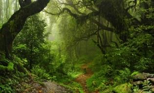 Ioan Deneş: România are una dintre cele mai mari suprafeţe de păduri virgine din Europa