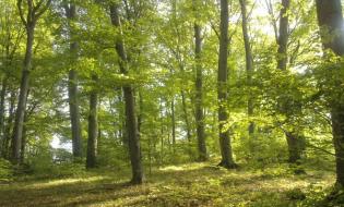 Suprafaţa fondului forestier a crescut anul trecut cu 0,3%