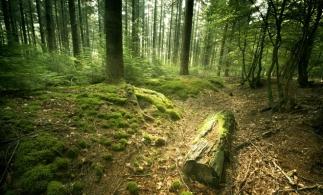 Inventarul Forestier Național
