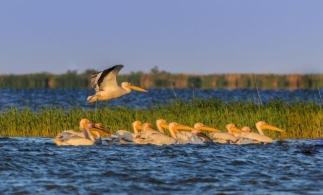 Plata prin SMS – o nouă modalitate de obținere a permiselor de acces în Rezervația Biosferei Delta Dunării