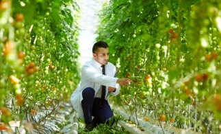 Dubai intenționează să pună la punct o revoluție agricolă în mijlocul deșertului