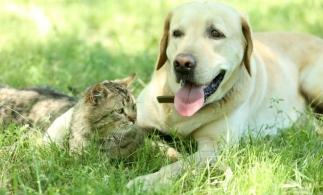MAI: În proiect, noi reglementări privind protecţia animalelor