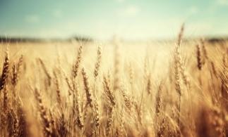 Începând de mâine, fermierii pot depune cereri pentru ajutorul de stat pentru culturile afectate de secetă