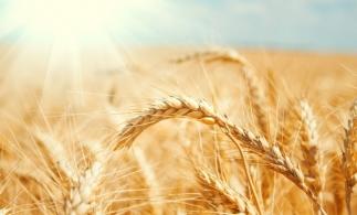 Adrian Pintea (APIA): Peste 9.800 de fermieri au depus cereri de despăgubiri pentru secetă