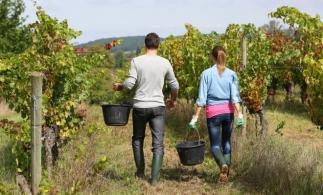 Adrian Oros: Priorităţi pentru agricultură - ferma de familie, gestionarea apei