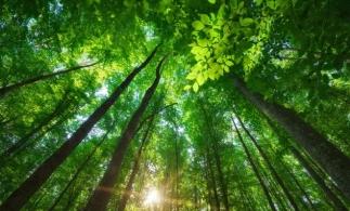 Romsilva plantează peste 3,5 milioane de puieţi forestieri în campania de împăduriri de toamnă