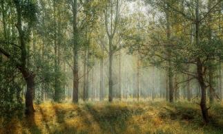 MMAP a finalizat opţiunile strategice pentru politica forestieră pentru următorii 10 ani