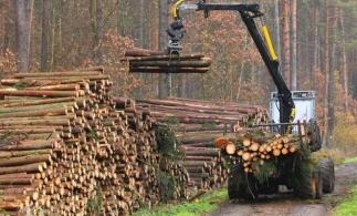 Ministrul Mediului: SUMAL 2.0 a scos la suprafață cantități uriașe de masă lemnoasă transportate și procesate ilegal