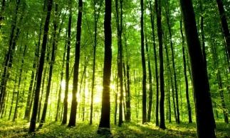 Ministrul Mediului: Un draft al Strategiei Forestiere Naționale ar putea ajunge pe masa Parlamentului și Guvernului în primăvara anului 2022