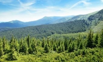 Eurostat: Aproape 43% din teritoriul UE era acoperit de păduri, în 2015