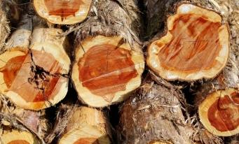 Volumul de lemn exploatat în 2018 a crescut cu 8,9% faţă de anul anterior