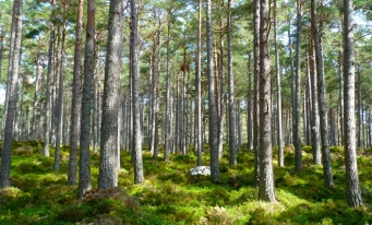 Eurostat: 38% din suprafaţa UE era acoperită cu păduri în 2020