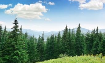 INS: Fondul forestier național s-a majorat cu 0,2% în 2020; volumul de masă lemnoasă recoltată, în creștere cu 4%