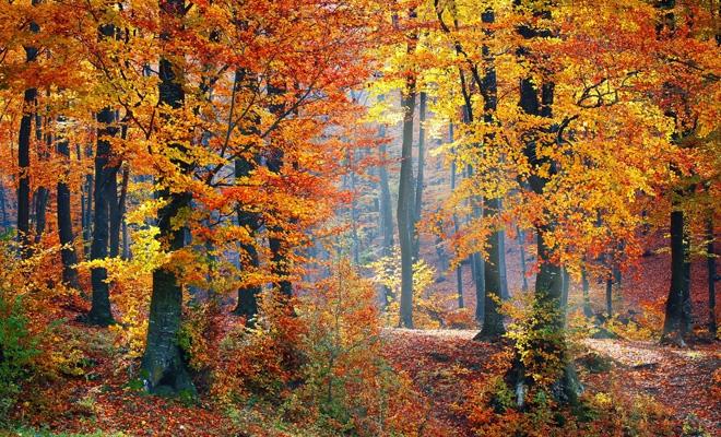 Compensații financiare pentru proprietarii de pădure din zonele protejate