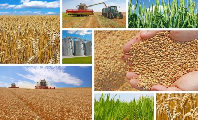 INS: În 2016, valoarea producției agricole a crescut cu 2,5% comparativ cu 2015