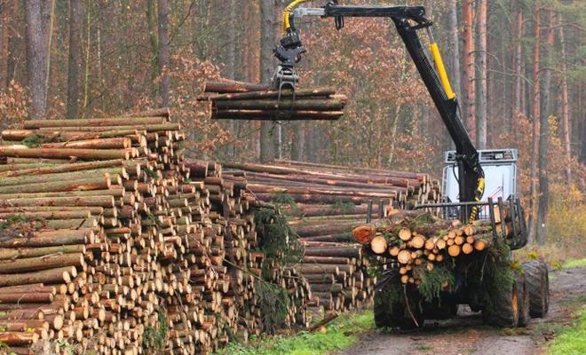 A fost adoptat Regulamentul de valorificare a lemnului din pădurile statului