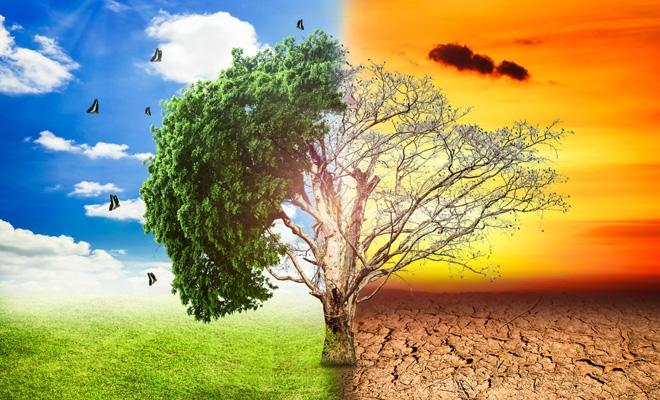 Studiu: Beneficiile economice ale luptei împotriva modificărilor climatice sunt subestimate