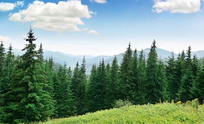 A fost aprobată înființarea structurilor teritoriale ale Agenției Naționale pentru Arii Naturale Protejate