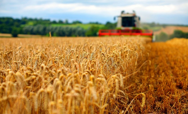 Raport la nivel comunitar privind aplicarea normelor în materie de concurență în sectorul agricol