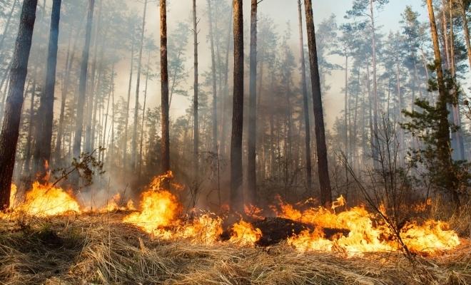 În 2018, incendiile au distrus aproximativ 178.000 ha de păduri și terenuri din UE