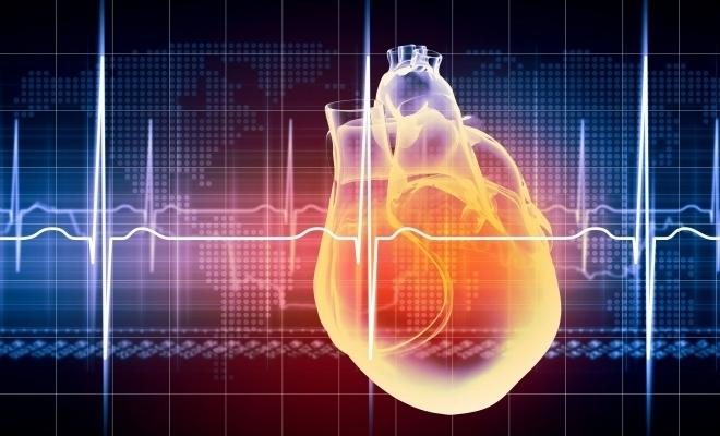 Prima inimă robotizată, obținută cu ajutorul celulelor stem și al biotehnologiei, este în dezvoltare